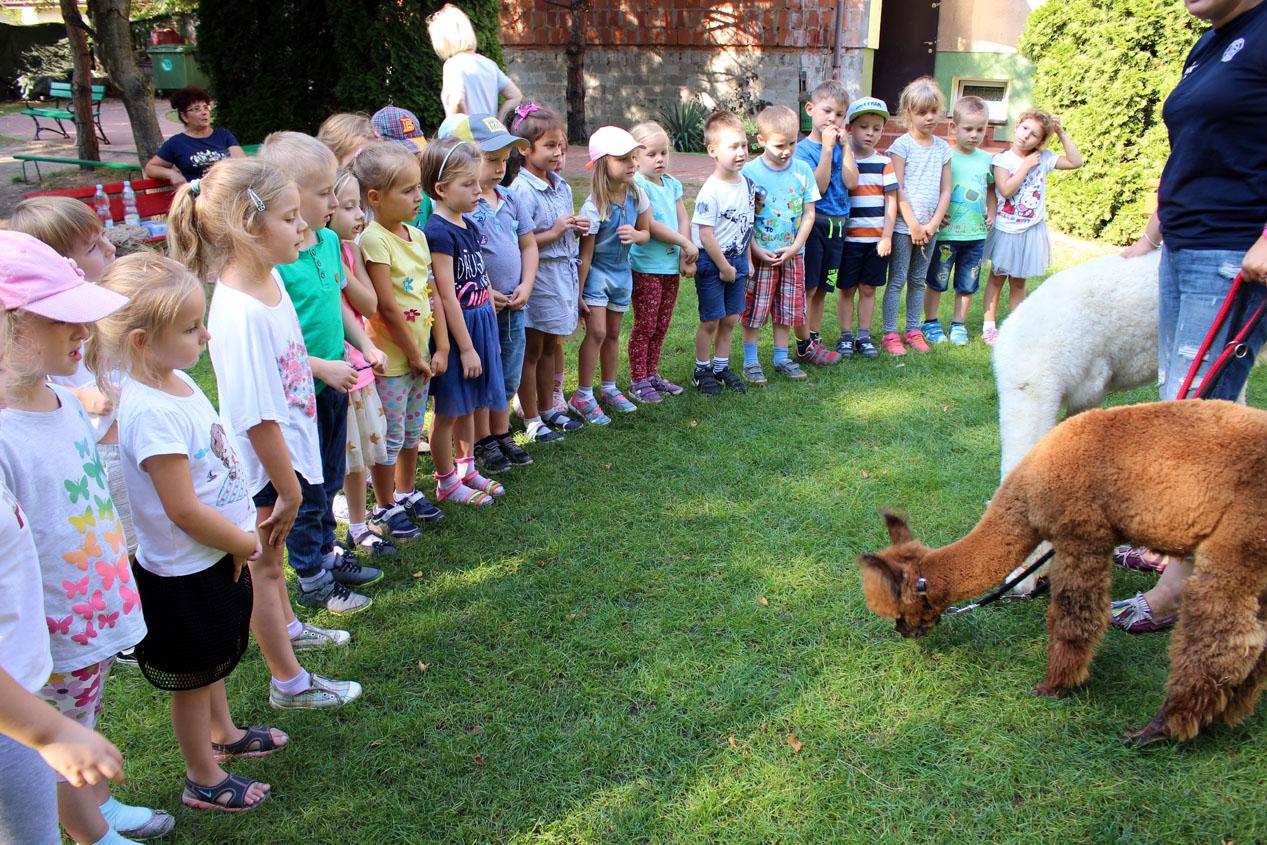 Uroczystości z okazji Święta Przedszkolaka – spotkanie z Alpakami